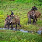 Elephant Safari in the fantastic jungle of Chitwan National Park on North Nepal's Chitwan Jungel Safari 5 days package