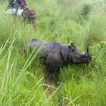 One-horned rhino of Chitwan National park on North Nepal's Chitwan Jungel Safari 5 days package