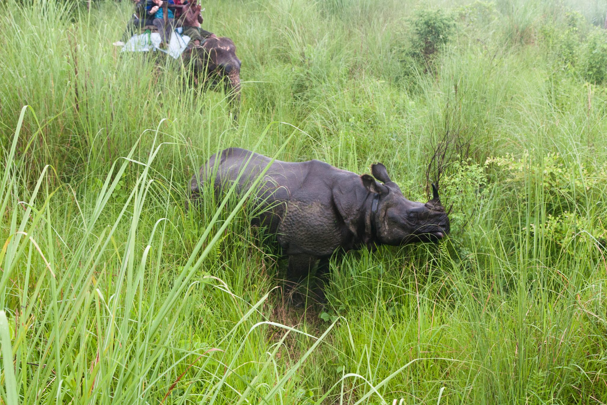 Chitwan National Park Safari -one of the must-do activities